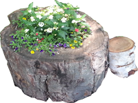 Flower pot made from the base of a tree