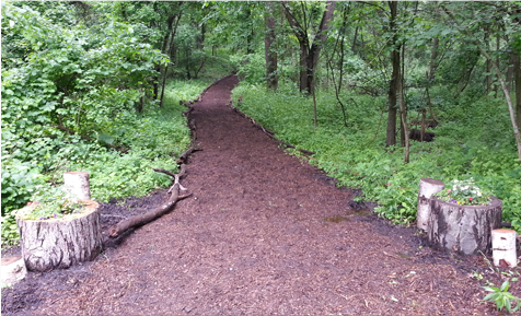 Forest path covered in mulch